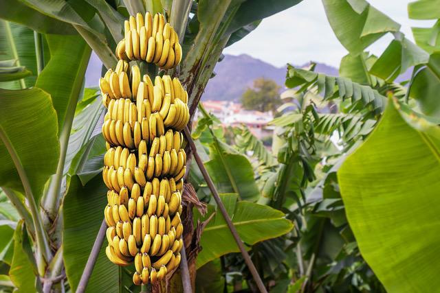 Fintech Vulnerability and Bananas